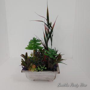 Cactus plants for weddings